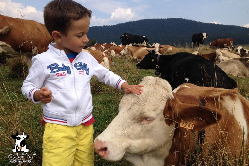adotta una mucca malga masi